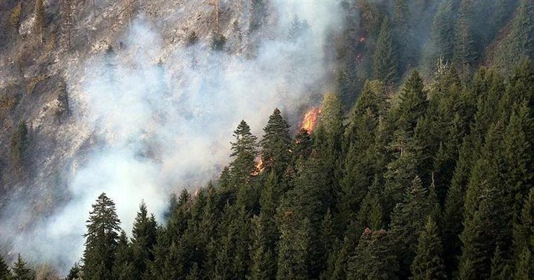 Gümüşhane, Örümcek Ormanları'nda yangın çıktı